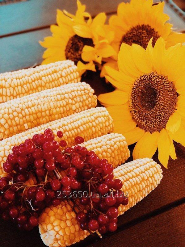 Купить Сладкая кукуруза в початках