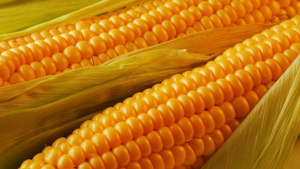 Купить Насіння кукурудзи Солонянський 298св