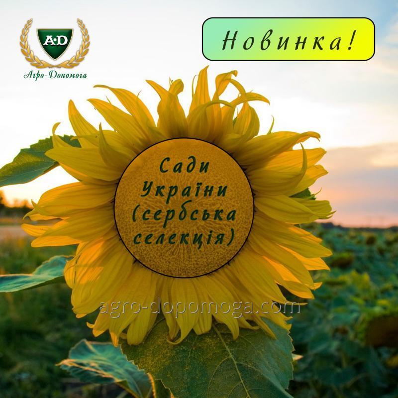 Купить Семена подсолнечника НС Х 7258 (Раптор) Сады Украины