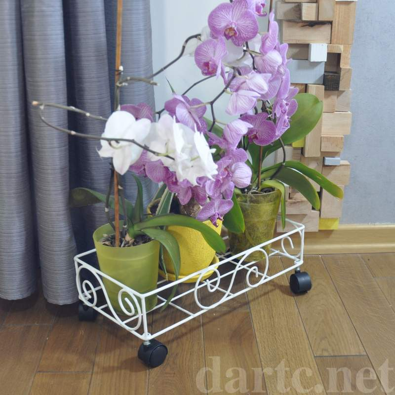 "Buy Stand for flowers ""Long"" Roller"