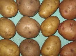 Купити Картопля: Рив'єра, ероу, Беллароза, Романо, Роко, Санте.