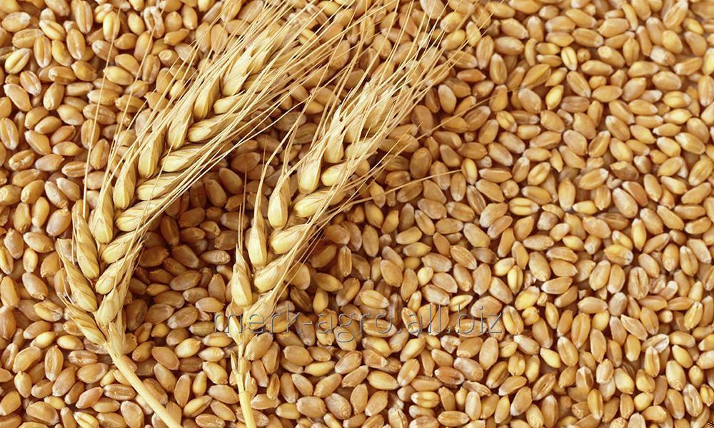 Пшеница 2 класс, белок 12.5% упаковка ПП мешки 50 кг