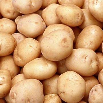 Купить Картофель. Домашний, разносортица (сорта Лаура 90%+БелаРоса10%), чистая, без повреждений.
