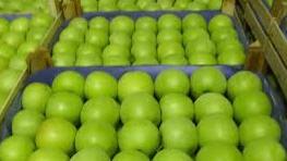 Купить Яблоки сорт Муцу (Мутсу)