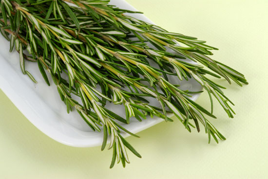 Rosemary. Spice plants and herbs ground