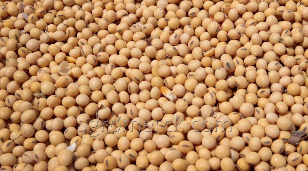 Соя Без ГМО белок мин 31% насыпью или в ПП мешках 25 / 50 кг