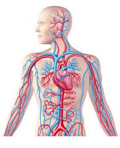 kaufen Yolman №11 - ein Tropfen Gesundheit des Herz-Kreislauf-System