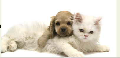 Купить Наполнитель гигиенический для туалетов домашних животных
