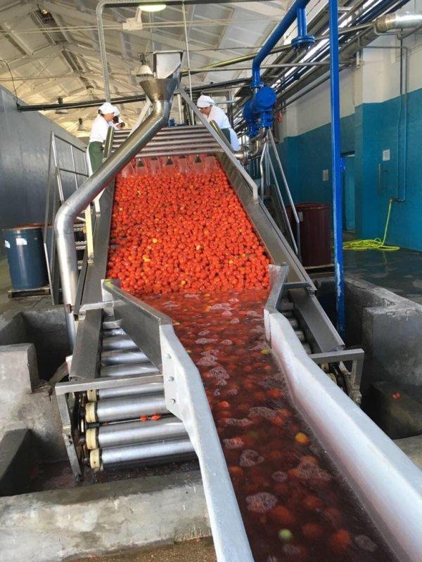 Купить Линия по переработке томатов Rossi Catelli полная комплектация, производительность 500т в сутки