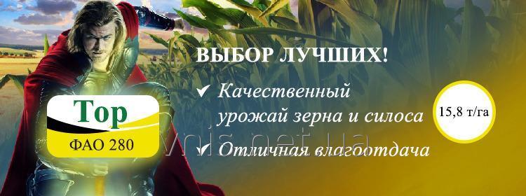 Семена кукурузы Тор (ФАО 280) Новинка!