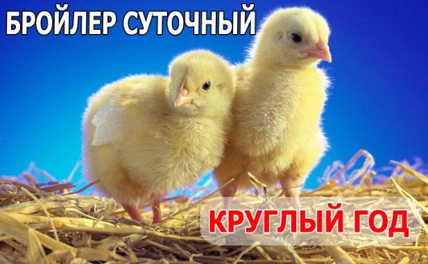 Цыплята бройлеры в Украине