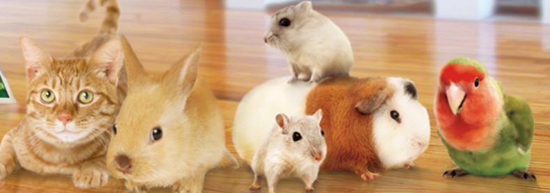 Купить Наполнители гигиенические для туалетов домашних животных от производителя оптом