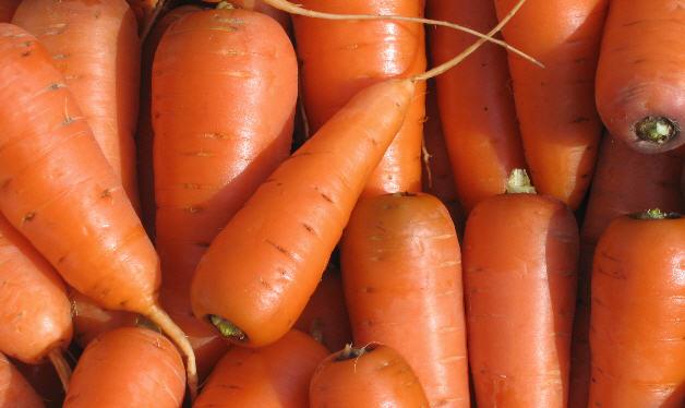 Купить Морковь, Выращивание и продажа плодоовощных культур: морковь, помидоры, кабачки. Также, саженцы яблонь.