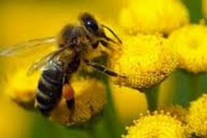 Утеплитель для пчелиных ульев. Утеплители для ульев. Войлочный утеплитель для пчелиных ульев. Утепления гнезд пчелосемей