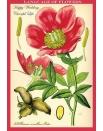 Открытки цветочные Язык цветов Пион , купить, цена, фото.