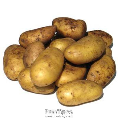Картофель ок. 100 тонн .Опт по Украине. Самовывоз  Белла Росса, др. сорта