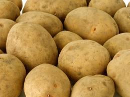 Купить Картофель семенной