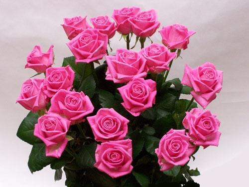 Живые цветы — купить в виннице живые