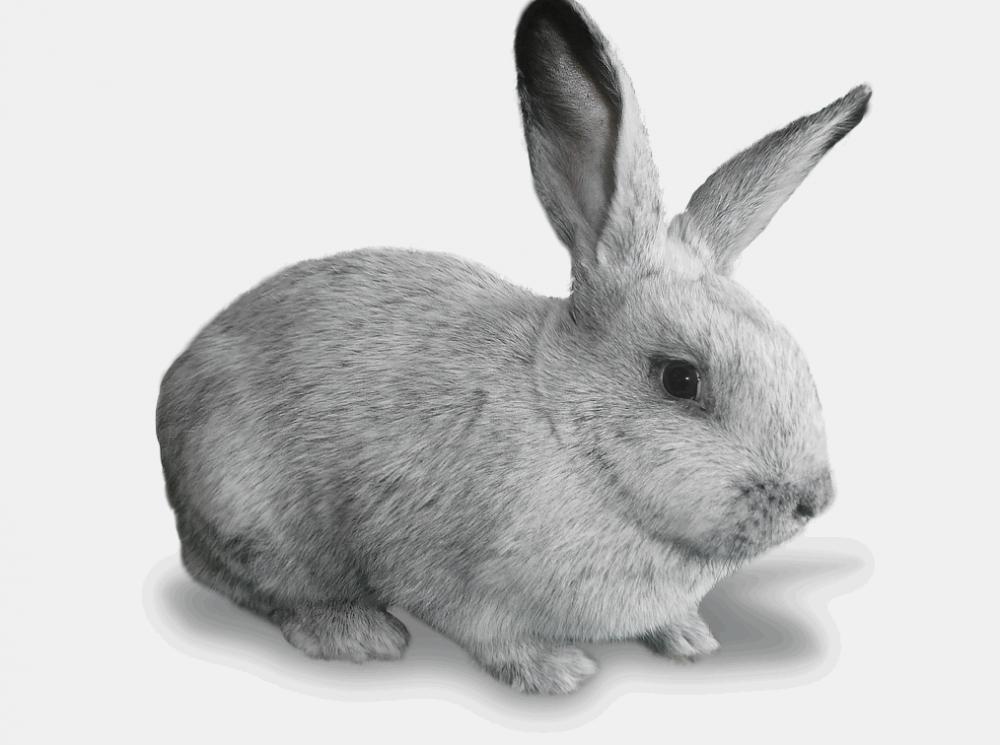 картинки кроликов: