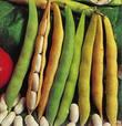 Buy Haricot, haricot seeds, long white beans, round white beans, haricot of grades of Maslyank, Sugar, Ukraine, Export.