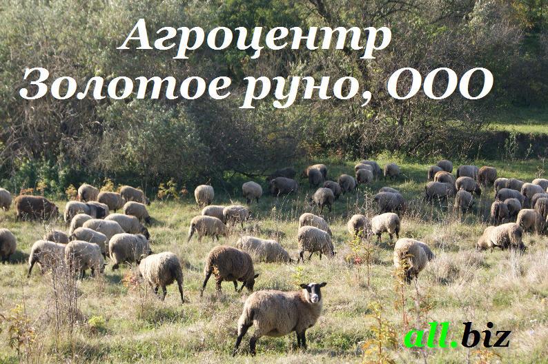 Купити М'ясо ягняти, купити м'ясо ягняти, в Україні, ціна від виробника, м'ясо ягняти експорт, купити ягнятину оптом