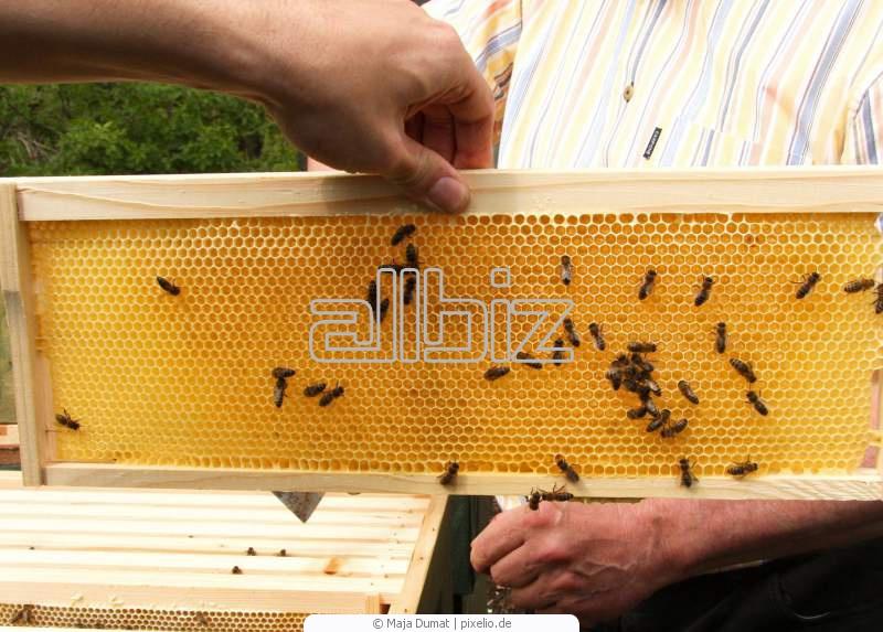Купить Мед пчелиный