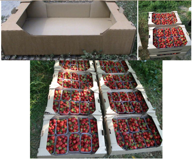 Packaging for fruit. The tray is strawberry