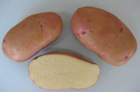 """Картофель семенной. Сорт """"Тирас"""""""