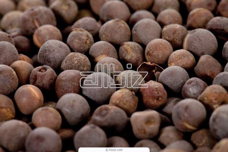 Купити Семена гірчиці чорна, ціна, продам, Україна