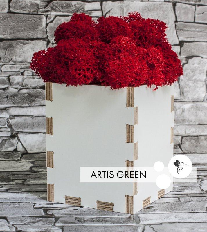 Купить Сувенир из ламинированной фанеры со мхом Red Moss&White Wood, S80
