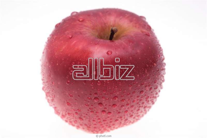 Купить Яблоки свежие от производителя. Крупный и мелкий опт.