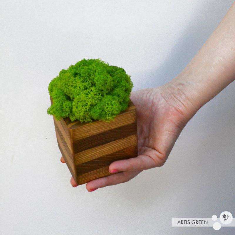 Купить Сувенир из настоящего дерева со мхом Striped Wood
