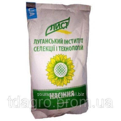 Семена подсолнечника Сулико 50, экстра, под гранстар