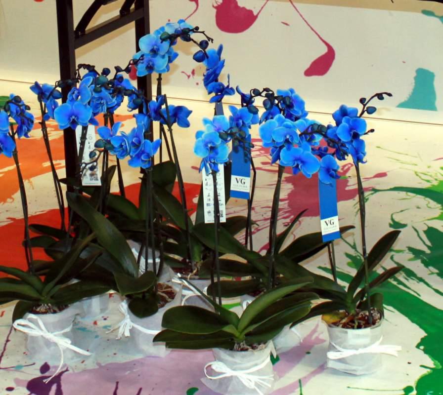 Орхидеи купить дёшево