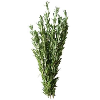 Купить Розмарин свежий из Израиля ( зелень оптом )