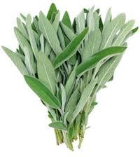 Купить Шалфей свежий из Израиля ( зелень оптом )