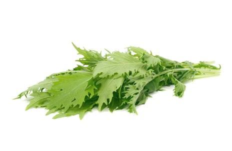 Купить Мизуна свежая из Израиля ( зелень оптом )