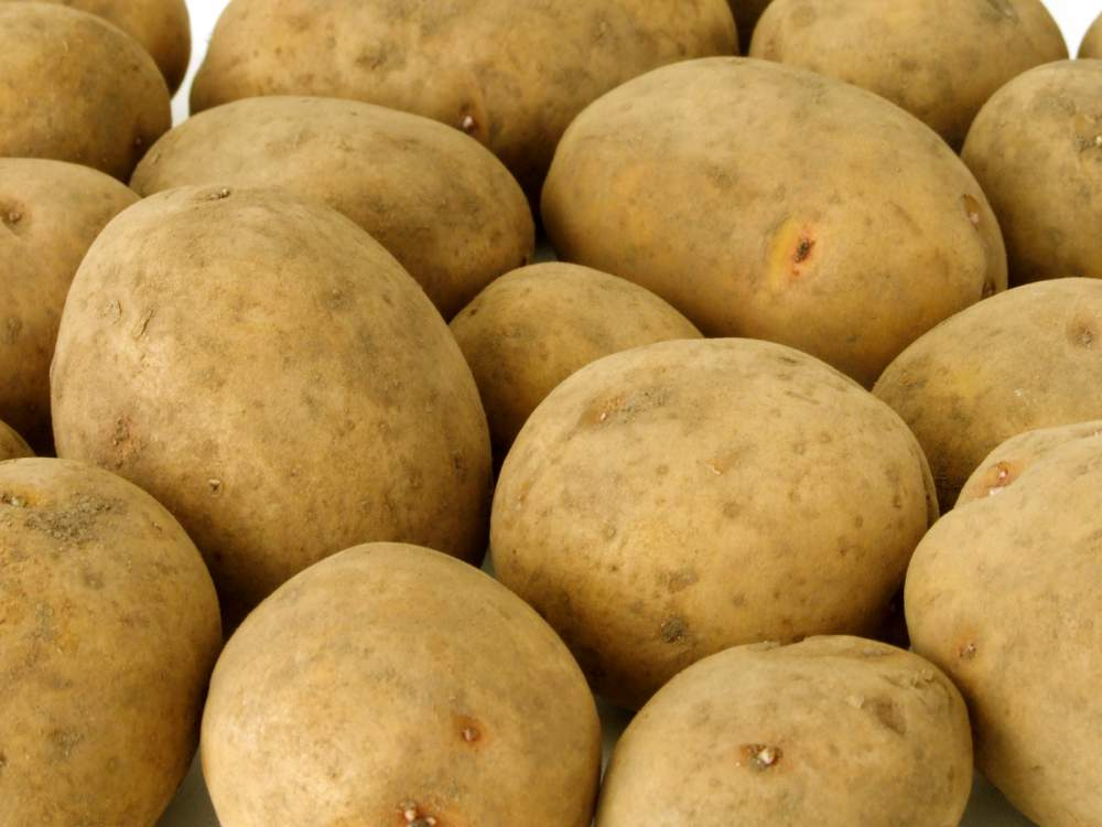 Купить Картофель сортовой