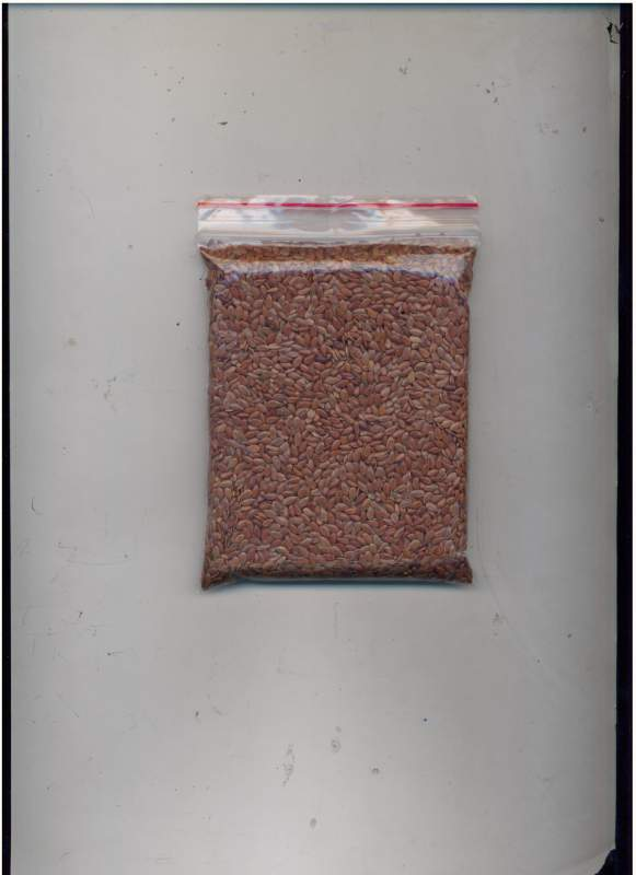Buy Flax for export (linseed-flax)