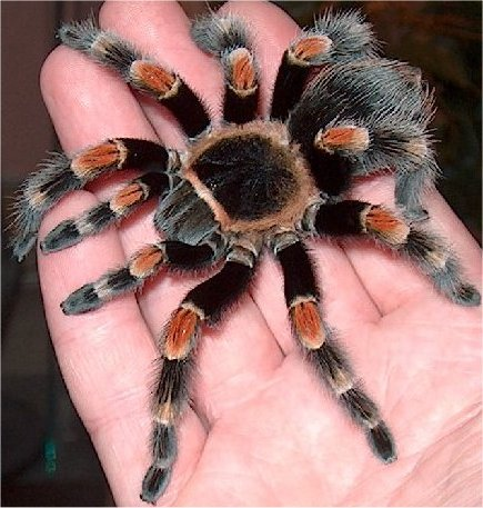 рамочные Комплектующие приметы паук на теле ходит виброплита своими руками