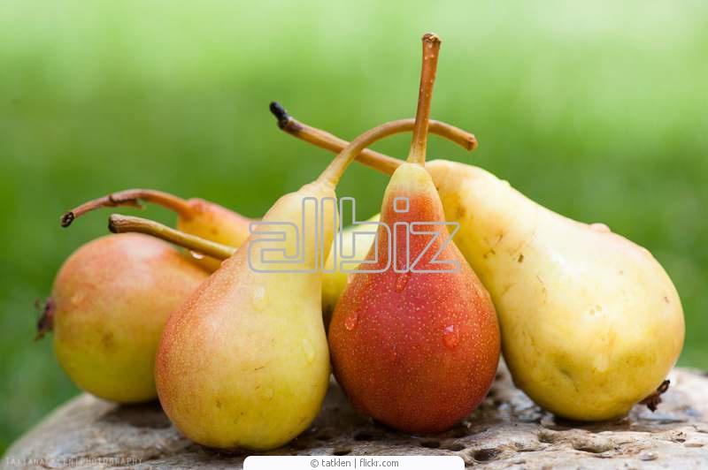 Buy Pears