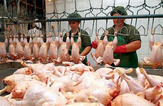 Купить Мясо птицы