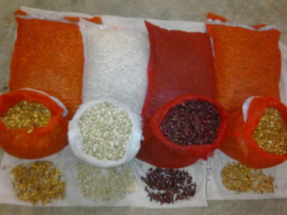 Лук севок, лук сеянка, лук посевной  (Партия от 100 кг)