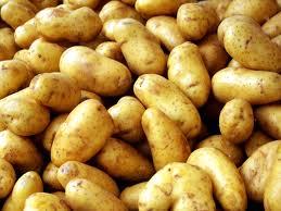 Купить Семенной картофель из Чернигова крупным и мелким оптом