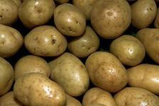Купить Картошка из Чернигова оптом и в розницу