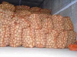 Купить Репродукционный картофель из Чернигова