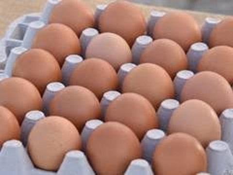 Купить Столовое красное яйцо