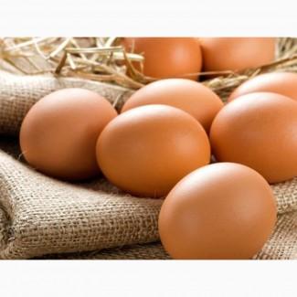 Купить Яйца куриные столовые