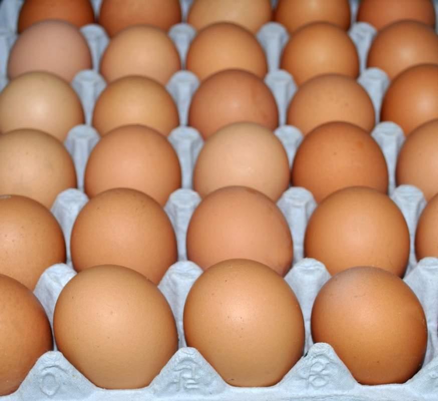 Купить Яйцо диетическое столовое