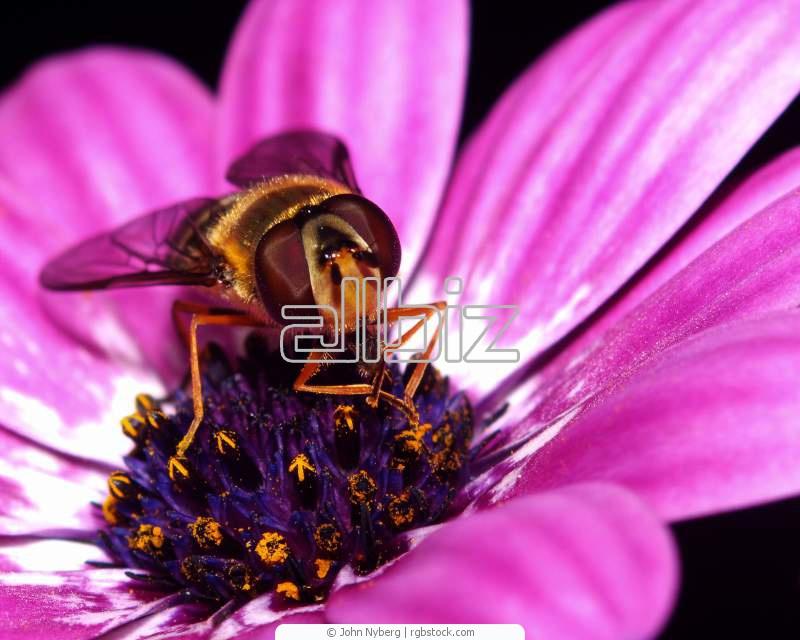 Купить Пыльца цветочная